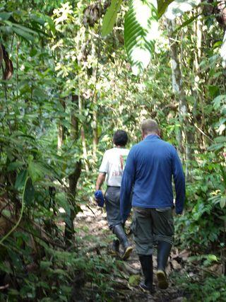 Treking in the rainforest