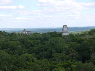 Tree top view of Tikal