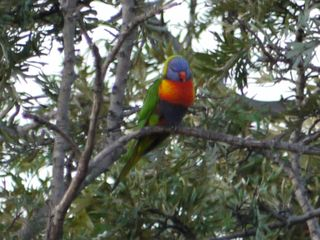 Parrot in the tree