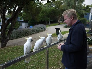 David and his Cockatoo troupe